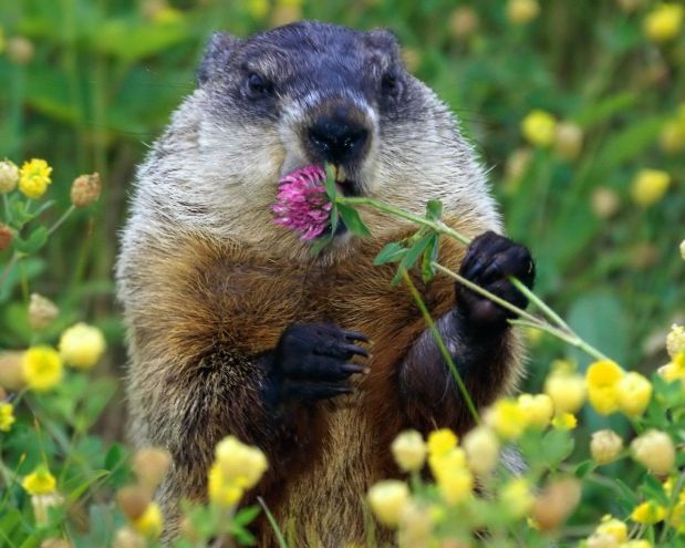 Animals Sniffing Flowers Is The Cutest Thing Ever (The via are not allowed!!)