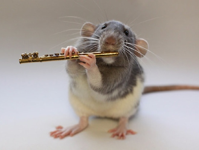 blog_yummypets_rat_clarinette_02_14
